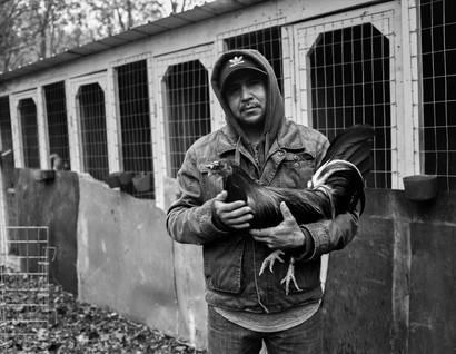 Pecking Order Image 11