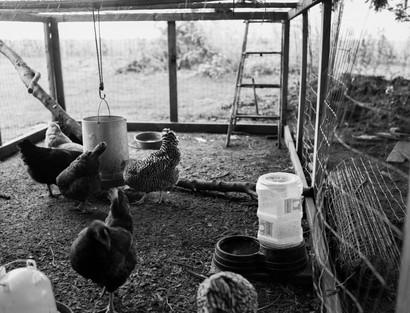 Pecking Order Image 3