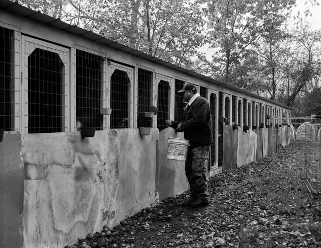 Pecking Order Image 12
