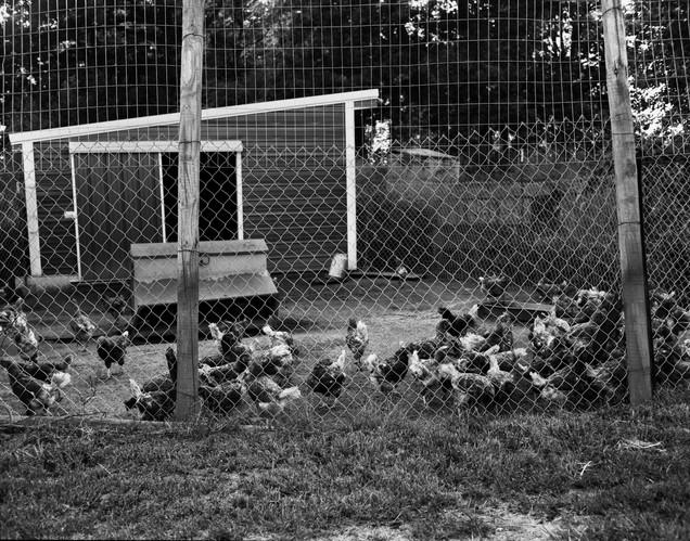 Pecking Order Image 27