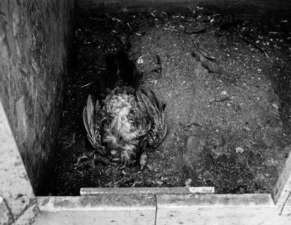 Pecking Order Image 22