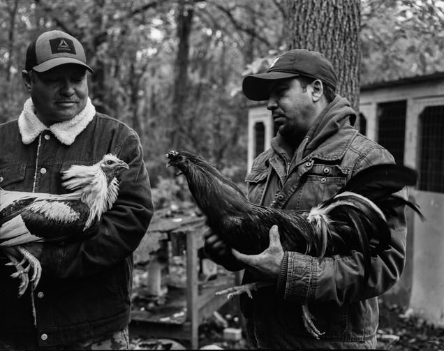 Pecking Order Image 14