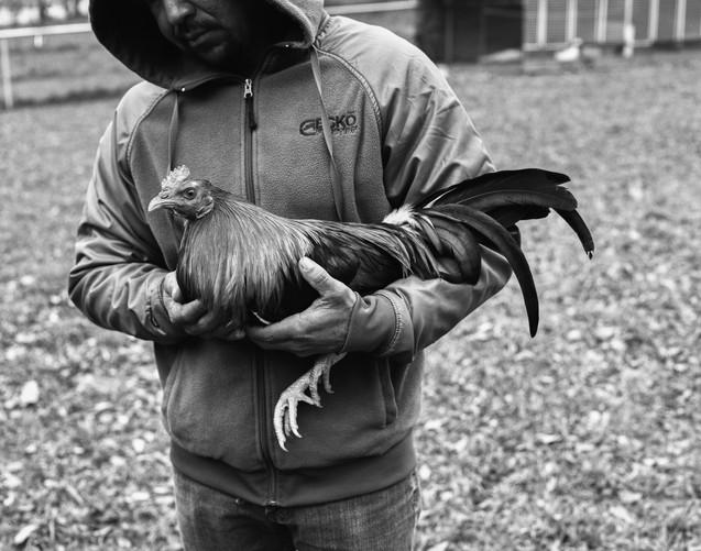 Pecking Order Image 24