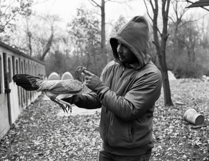 Pecking Order Image 1