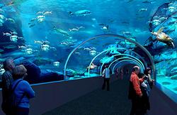 visit-two-oceans-aquarium(7)