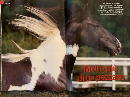 """BarockPinto sulla rivista """"Il Mio Cavallo""""!"""