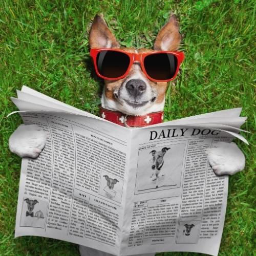 What Makes a Good Headline? | Dog reading newspaper | Skribu Digital | Canva Pro