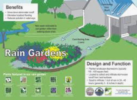 Children from Bmore Safe Project are accepting entries to provide a   free rain garden. Send entry
