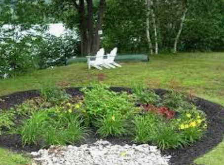 Bmore safe is still looking for a winner for a free rain garden