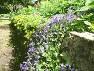 Grüne Gartenmauer