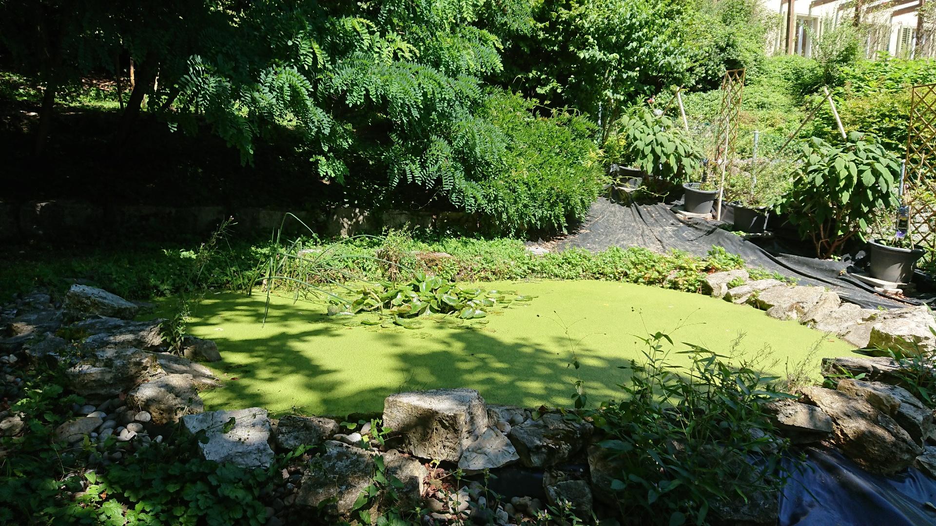 Garten mit Teich
