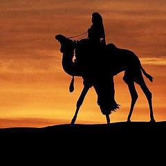 camel in sunset - Copy.jpg