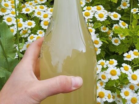 Delicious Elderflower Champagne