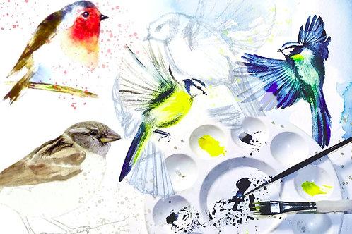 Garden Birds Drawing & Watercolour Class