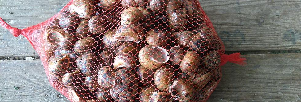Escargots petit gris vif 15€00/kg