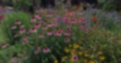 Mini%20meadow%20picture_edited.jpg
