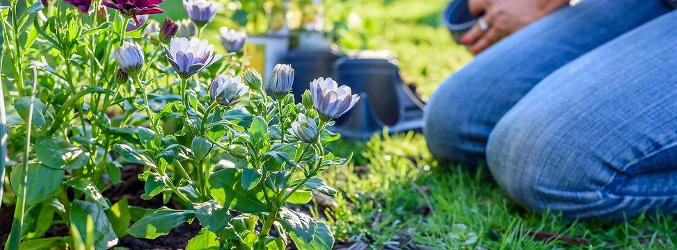 planting perennial garden.jpg