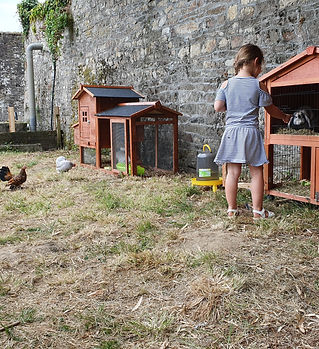 animaux poules lapins
