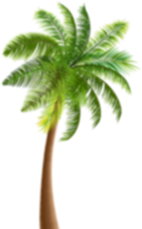 Palm Tree - Vector.png