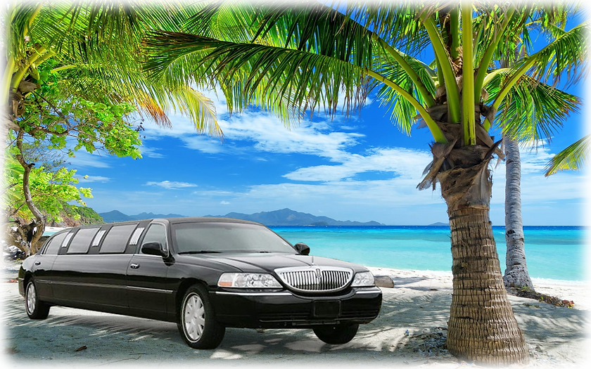 Limo Back - BIG-FEATHER-NEW.png