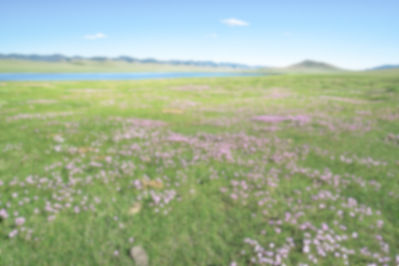 meadow-2453345_1280_2edited.jpg