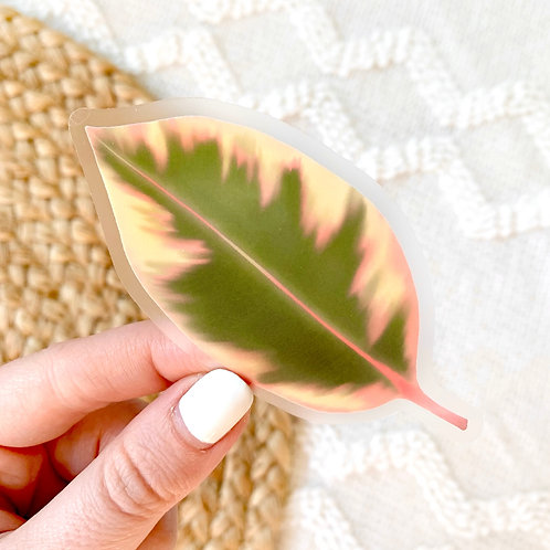 Clear Variegated Rubber Plant Leaf Sticker