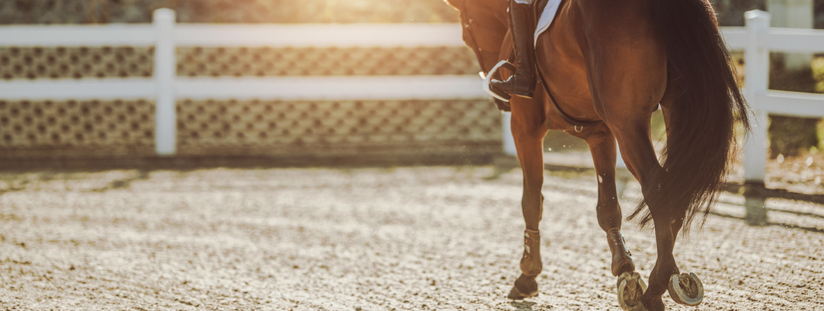 HorseInRing_jpg.jpg