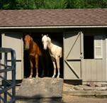 218_2009_our_farm_horses_599.jpg