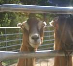 218_2009_our_farm_horses_031.jpg