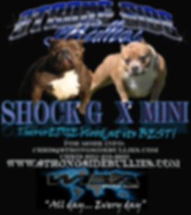 American Bully puppies American Bully Breeders