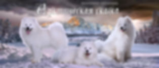 Питомник самоедов Арктическая сказка