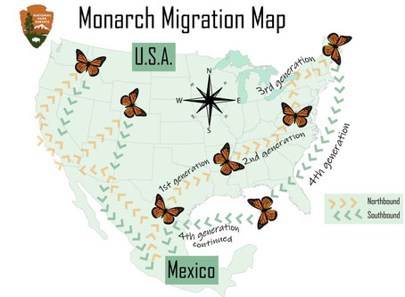 Indigenous Lives and The Monarch Butterfly Migration in Mexico
