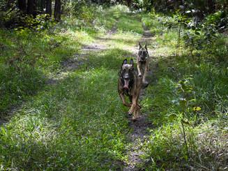 Major and Kaiya Running.jpg