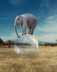 elephant-5695145_1920.jpg