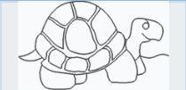 TurtleE2EorBorder.JPG