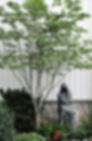 mary garden_edited.jpg