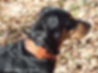 Collier pour chien personnalisé