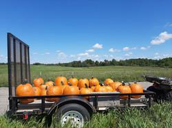 pumpkin trailer.jpg