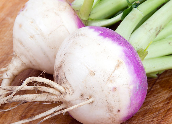 Turnip, Purple Top (1.5 lb.)