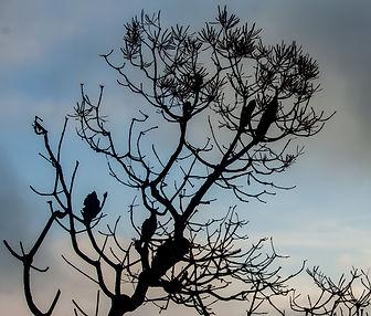 Banksia 1.jpg