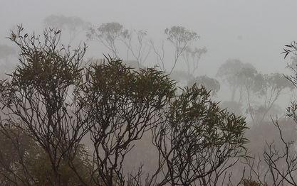 Misty mountains 7.jpg