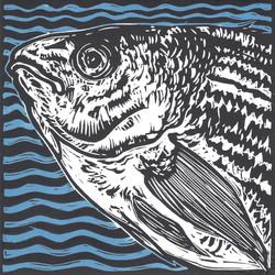 08 - Tina_Brown Fishy_Vision