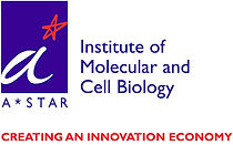 INSTITUTE OF MOLECULAR AND CELL BIOLOGY