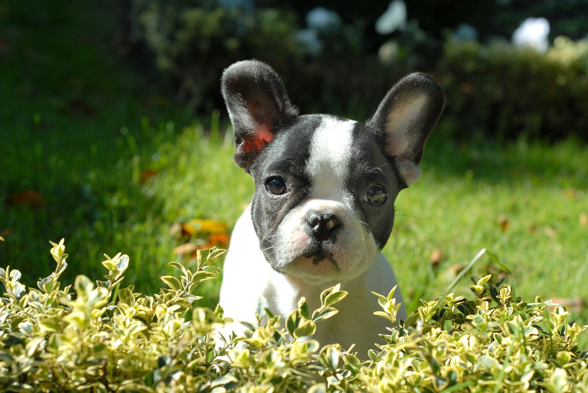 puppy-265420_1920