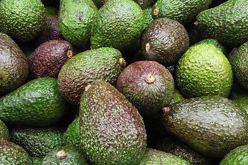 Large Avocados