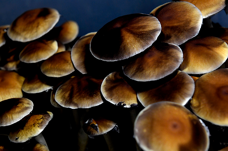 daily_dish_mushrooms_2.png