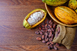 Fresh cocoa fruit with cocoa pods With c