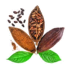 Cacao pods and beans and powder with lea