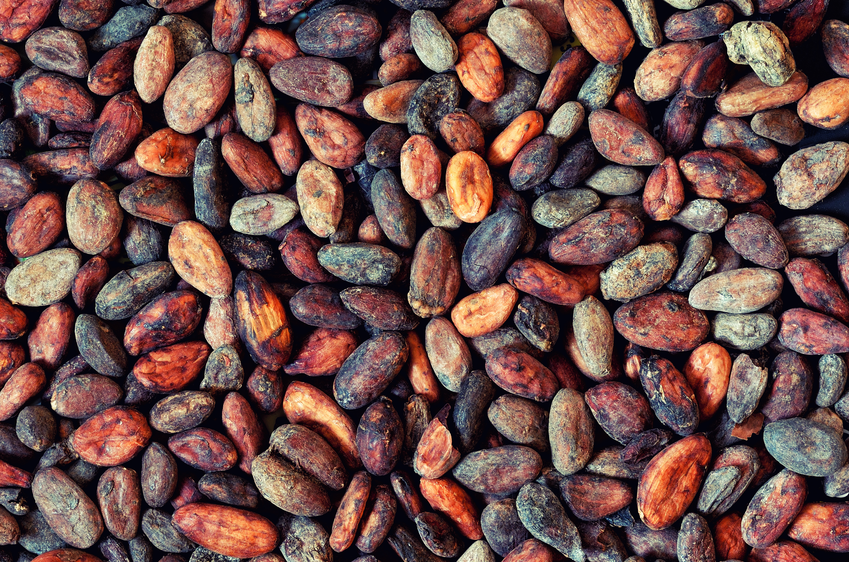 pattern of the cocoa beans background.jp