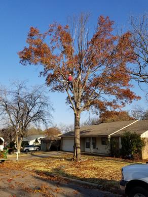 TreeTop Tree Service